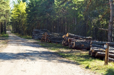 forest, fell trees, cutting, ecology, destroy, cut, deforestation, felling Stock Photo