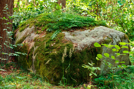 a huge stone in the forest covered with lichen