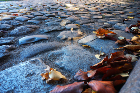 yellow and red autumn leaves on the road, fallen autumn leaves on the pavement Stock Photo