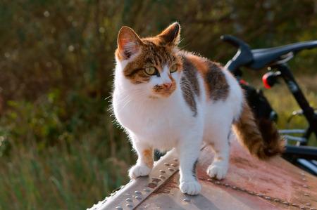 猫をモトリー、スポットキティカラフルな家 写真素材