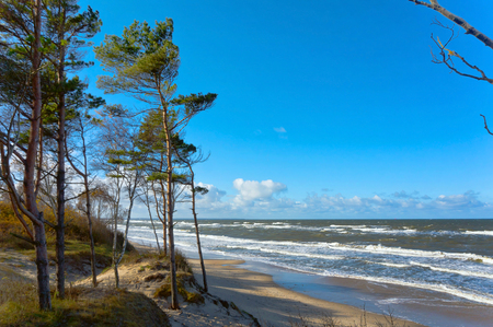 sea coast with trees, pines by the sea, the waves on the Baltic sea Stock Photo