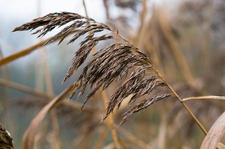 autumn grass background Golden grasses, dead grass, dry