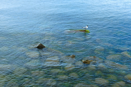 the Seagull stands on a stone in the sea, circles from a rain on water Stock Photo