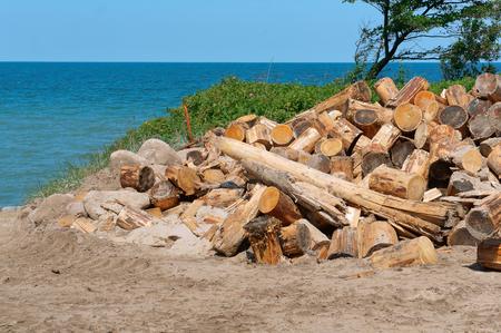 logging on the coast, deforestation, felled trees