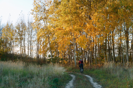 cyclist rides through the forest, Cycling through the autumn forest