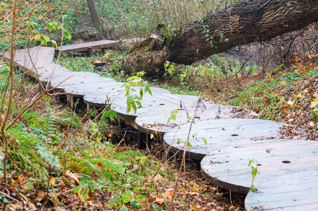 stairs of wooden circles, homemade staircase in the forest Stok Fotoğraf