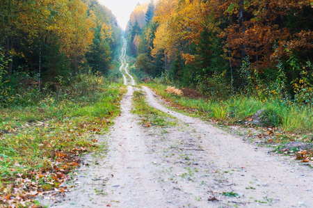 yellowed and reddened leaves of trees, the road in the autumn forest Stockfoto