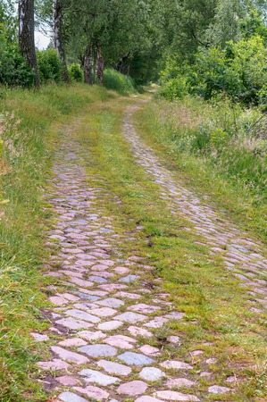 cobblestone road in the forest, the old forest road of their cobblestones
