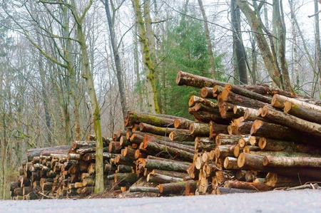 hardly laid logs, felled trees in the fores