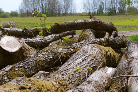 felled trees, trunks of felled trees Stockfoto