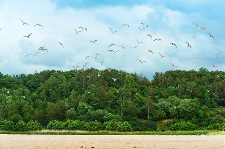 a flock of seagulls on the coast, seagulls over the shore
