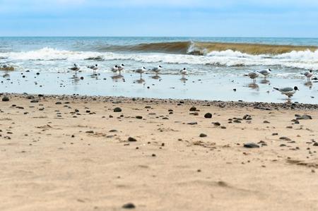 a flock of seagulls on the sand, seagulls on the beach Stockfoto