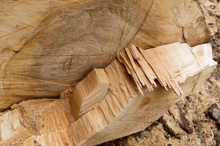 cut on a tree trunk, line cut on a log