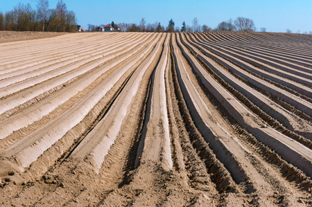 plowed field in spring, smooth furrows of agricultural land