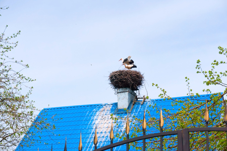 storks nest on the roof, birds nest on the house Stockfoto