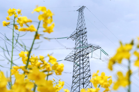 power line in the field, power line among the yellow wildflowers