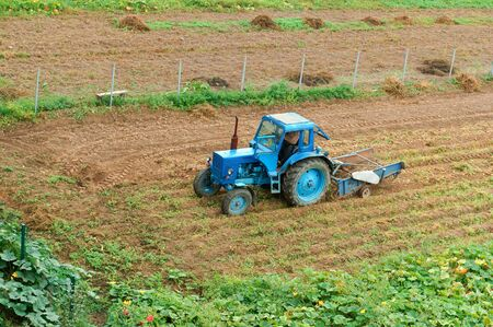 blue tractor at harvest, tractor collects potatoes in a field, Kaliningrad region, Russia, August 25, 2019