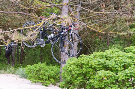 two bikes in the forest, a bike weighs on a tree, Kaliningrad region, Russia, June 01, 2019