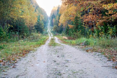road in the autumn forest, yellowed trees in the autumn forest