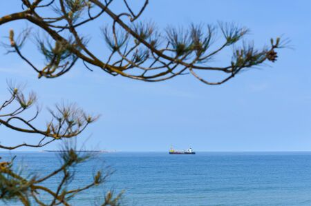 ship at sea on the horizon, pine fir branches off the coast of the sea