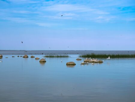 a flock of birds on the shore of a reservoir, sea birds take off from the shore