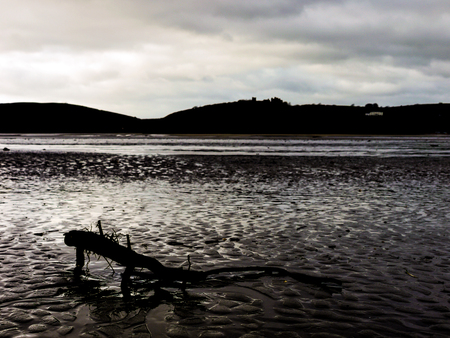 soggy: A broken branch lies in soggy sand close to the shore.
