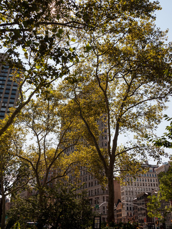 flatiron: The Flatiron buidling in New York City is visible through a collection of trees.