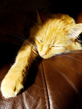 A ginger cat lies in a sun beam on a brown sofa