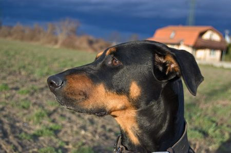 reclusion: Portrait of a black dog on a stormy evenening Stock Photo