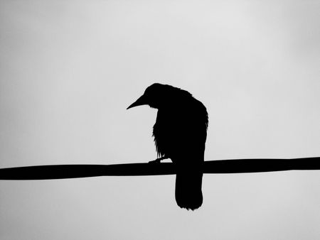 reclusion: A Silhouette of a black Raven