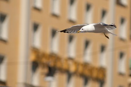 a seagull flying in front of a house in stockholm Stock Photo - 6660830
