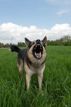 perro furioso: perro te aviso