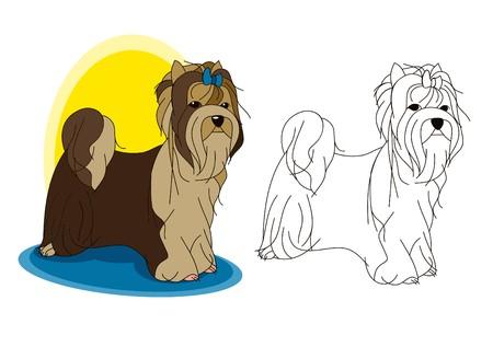 The cute Biewer Terrier dog is posing. Vector image.