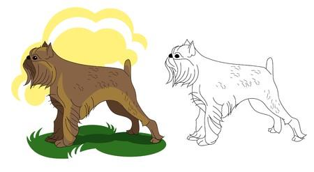 griffon: The breed of dog Griffon Bruxellois Illustration