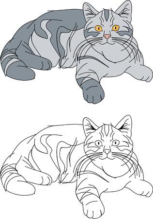 큰 회색 고양이 일러스트