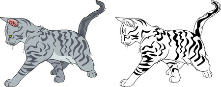 stripy: Running stripy cat