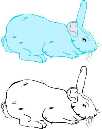 fleecy: White bunny