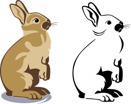 lapin sur fond blanc: brown bunny debout Illustration