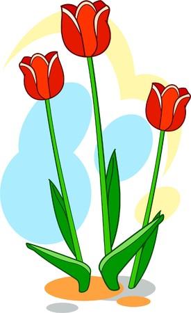 Three red tulips in the garden Vector