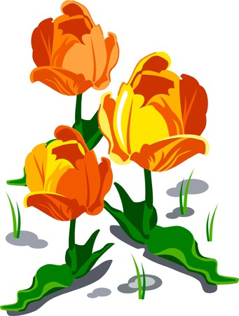 Three yellow tulips in spring Vector