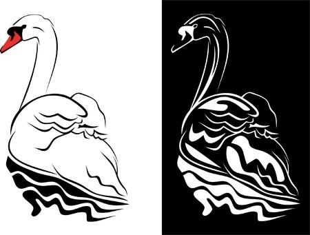 sunrise lake: swan