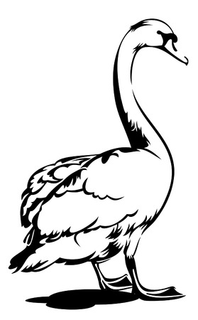 waterfowl: White swan