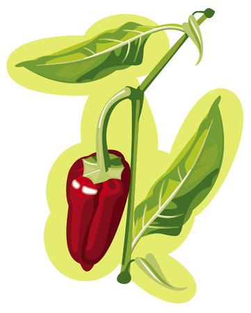 Poivron rouge sur une brindille cultivée dans les jardins