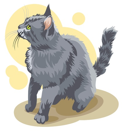 Gray cat sitting Vector