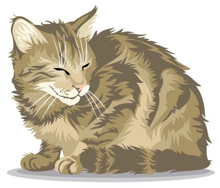 furry tail: Sitting cat