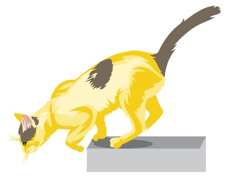 Jumping cat Vector