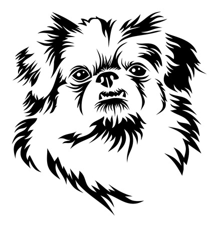 Pekingese Illustration