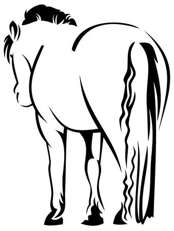 rump: rump of a horse Illustration