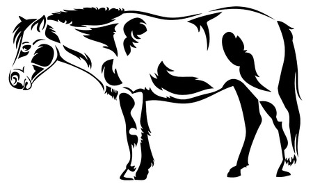 Vector outline image of a horse