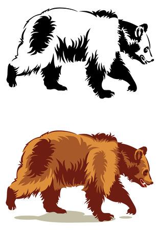 oso negro: Imagen del vector de un oso salvaje